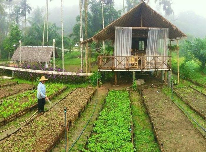 Farmstay – Xu hướng kinh doanh du lịch trải nghiệm dự báo 'hút' khách trong tương lai